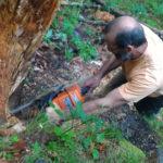 taglio radice di larice per panca stufa a legna